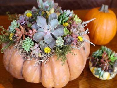 用漂亮的南瓜种多肉,适合秋冬的创意盆栽