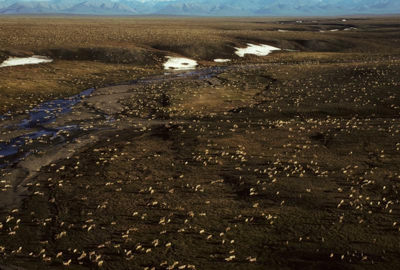 拜登政府暂停北极国家野生动物保护区石油开采