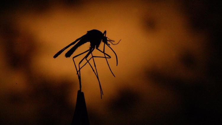 洛杉矶县报告2021年首例西尼罗河病例
