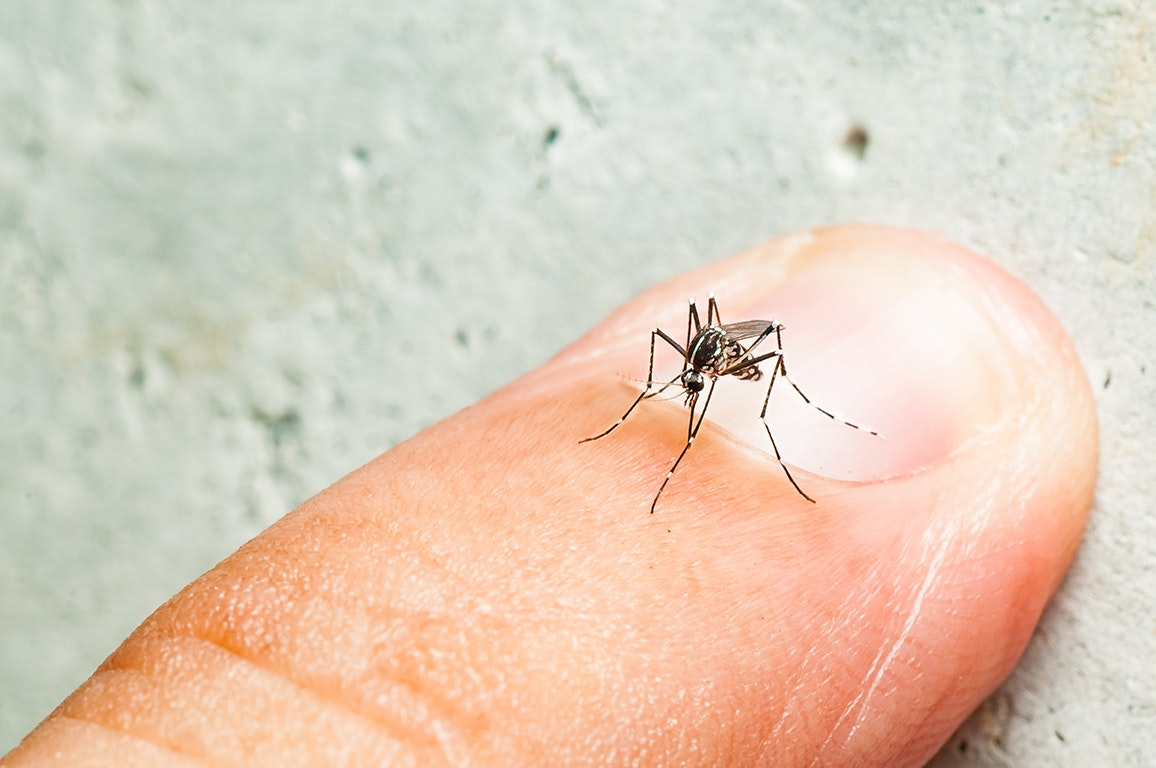 洛杉矶县伊蚊泛滥 几乎四季都在繁殖